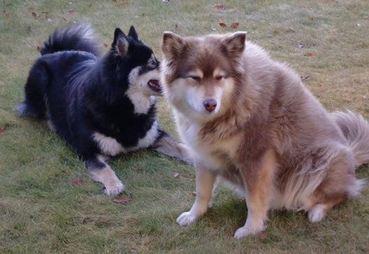 Roxie, Jackie på besøk018