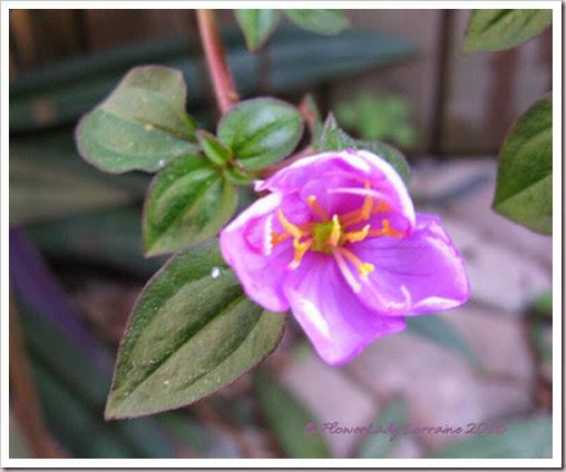 02-03-unkn-purple