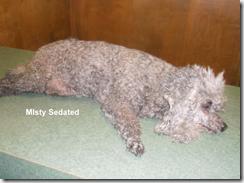 Misty-sedated-2014-01-09
