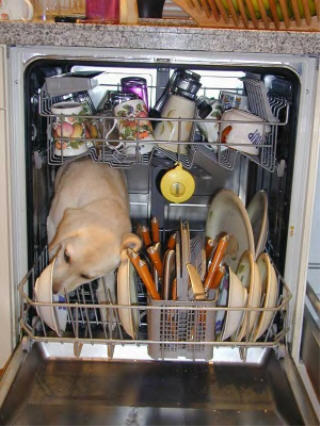 Puppy licking dishes in a Dishwasher