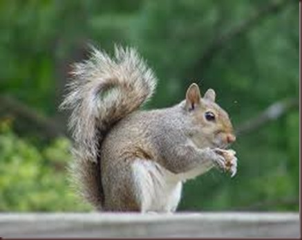 Amazing Animals Pictures Squirell (7)
