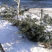 снежная зима 08-09 года (15).JPG
