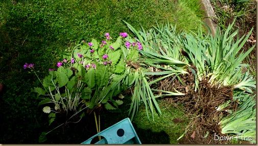 garden rehab_005
