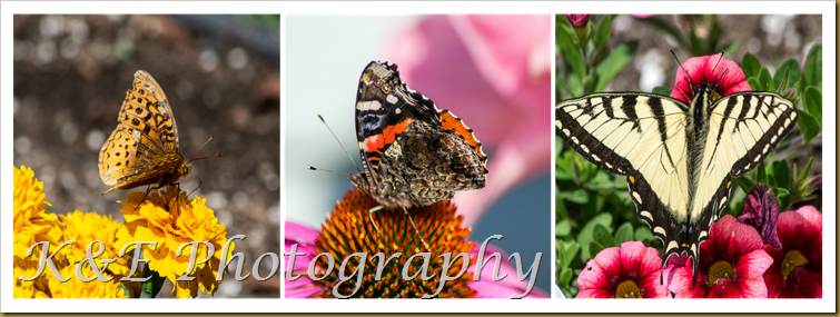 Butterfly's summer 2014PicMonkey Collage