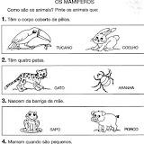 mamiferos.jpg