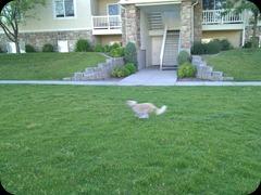 7-21-2011 fetch (4)
