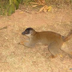 Lemurs Park::IMGP4473