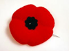The Poppy - Used as a Symbol to Remember the Horrors of War
