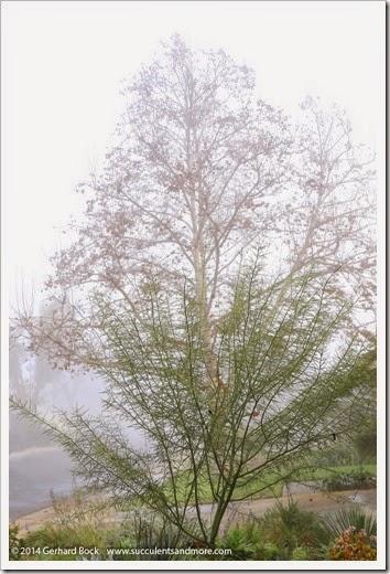 141223_fog_008