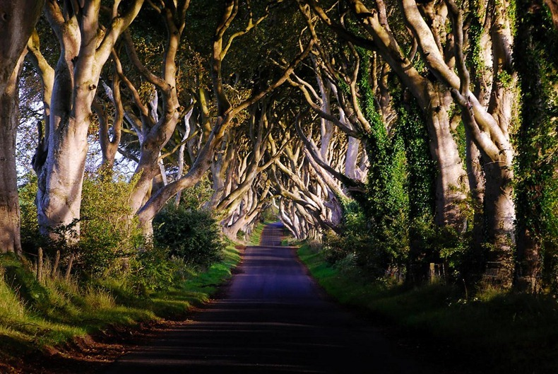 dark-hedges-5