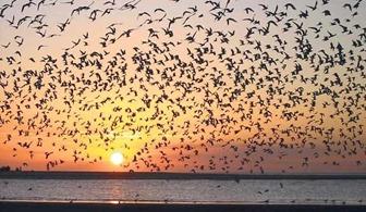 aves migratórias 1