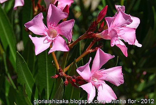 Glória Ishizaka - minhas flores - 2012 - 9