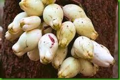 Syzygium corniflorum