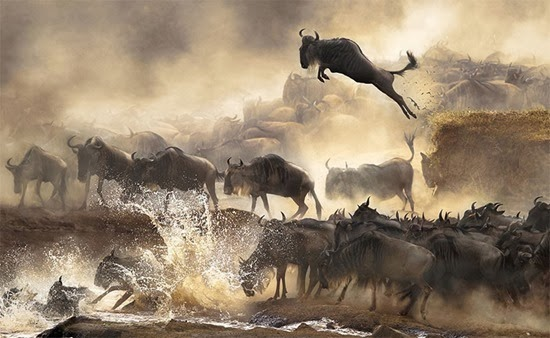 Sony World Photography Awards 06