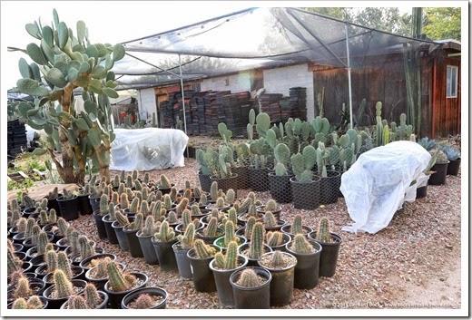 141231_Tucson_Bachs_0035