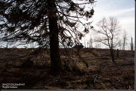 tree_20120408_standing