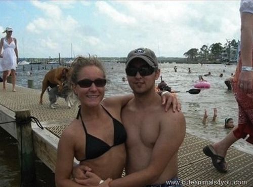 50_Funniest_Animal_Photobombs_Of_All_Time_25