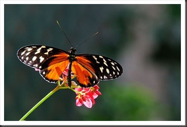 2011Aug3_Butterfly_House-41