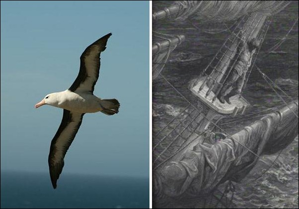 The Legend of the Albatross