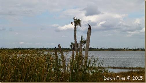 Viera Wetlands (29)