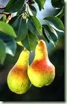 pears_w474_h725