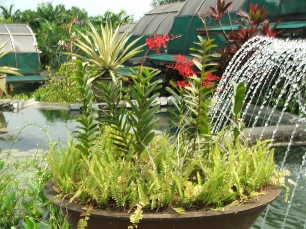 حدائق الاوركيد