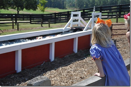 southern belle farm 100611 (51)