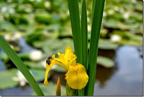 Nectar sucré.(Dulce néctar)