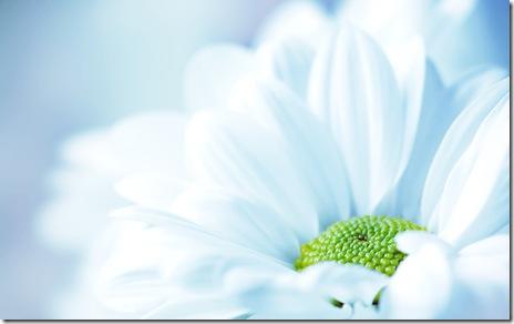 flori-macro-desktop