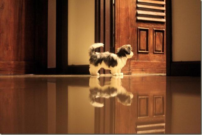 Nanu Baharuddin Pegang Dan Tidur Dengan Anjing3