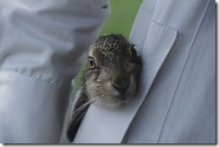 rabbit in pocket