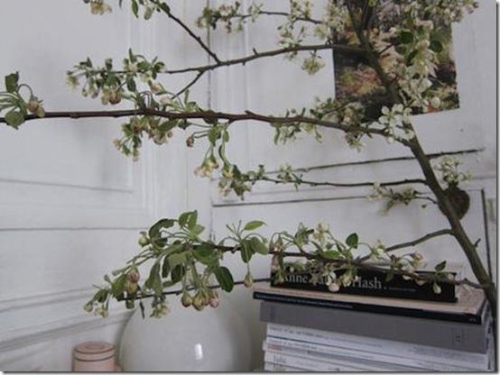 david-cheri-blossoms