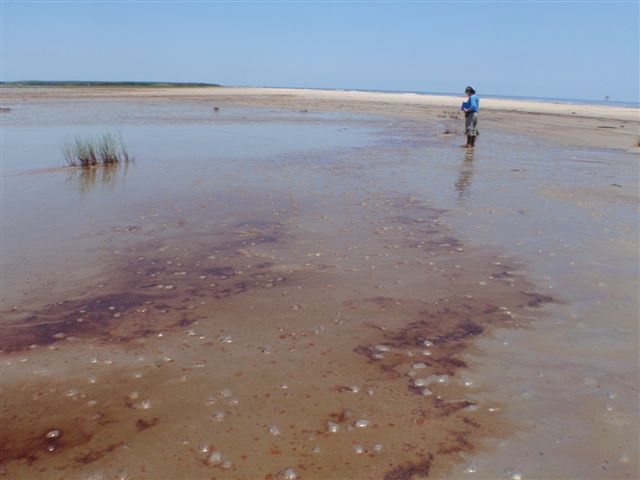 A Louisiana Department of Environmental Quality staff member assessing oil spill damage from the BP Deepwater Horizon spill to the state's South Pass beach on Monday, 17 May 2010. Isaac could churn up oil that remains buried in sediment. Photo: lagohsep / flickr
