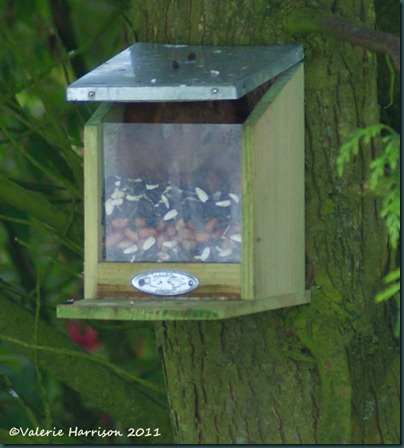 4 squirrel-in-feeder