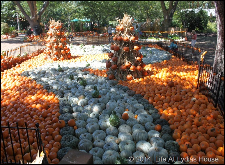 Dallas Arboretum - pumpkin festival-swan lake 1
