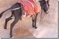 Oporrak 2011 - Jordania ,-  Petra, 21 de Septiembre  342