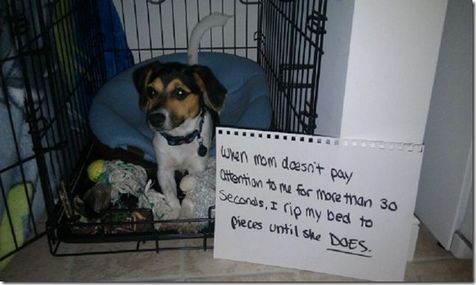dog-shaming-bad-9