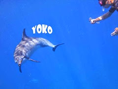 ハワイ島のヨウコさんのイルカ
