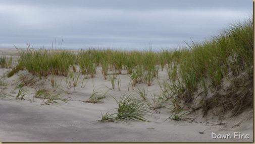 south beach bird trip_036