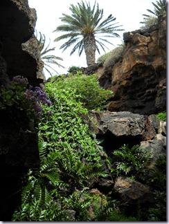 Lanzarote mare 689