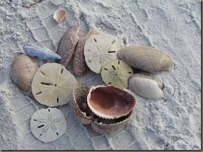 shells at fort desoto beach