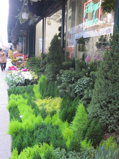 There is a wide selection of greenery set up outside of the store.