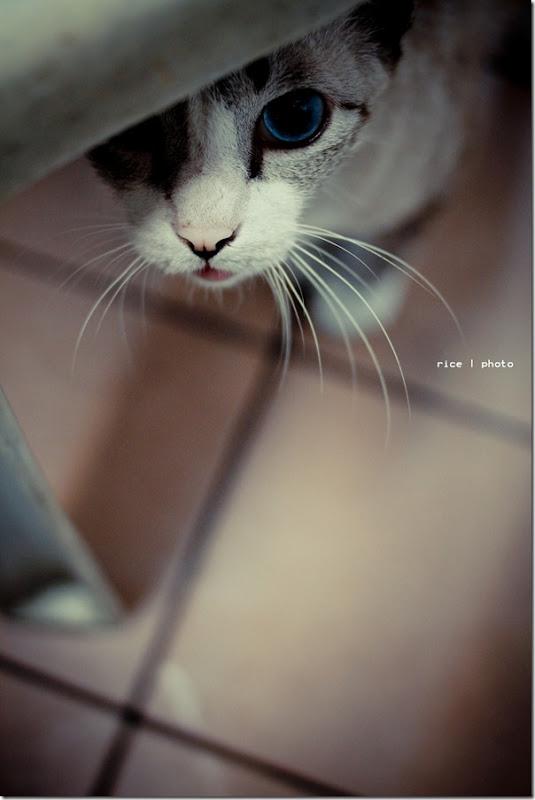 cat -0207