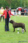 20100513-Bullmastiff-Clubmatch_31187.jpg