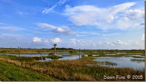 Viera Wetlands (53)