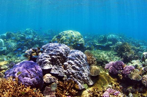 new_caledonia_lagoon_coral_reef_ile_nemou04