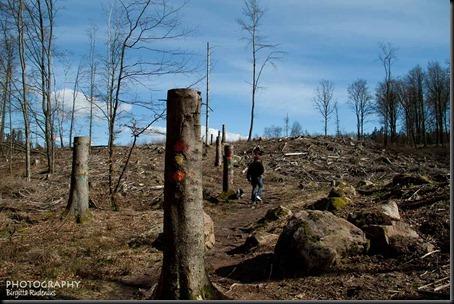 bjare_20120408_trail