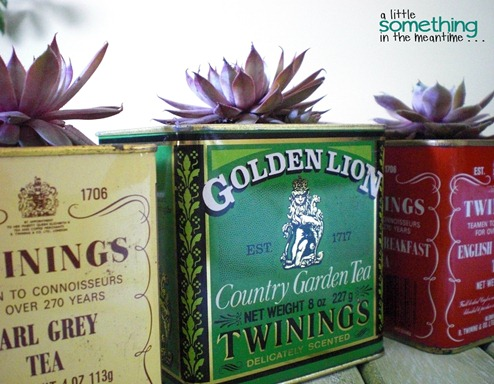 Tea Tin Planters After 6