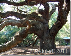 Angel Oak SC 1