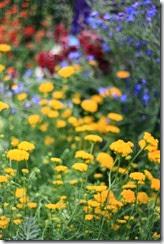 nybg-new-york-botanic-gardens-bronx-011